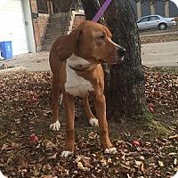 Adopt A Pet :: Sophia - Hamilton, ON