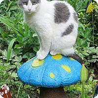 Adopt A Pet :: Dolly - Harrisonburg, VA