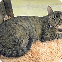 Adopt A Pet :: Sarabi - The Colony, TX