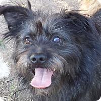 Adopt A Pet :: Snickers - Preston, CT
