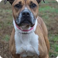 Adopt A Pet :: Guinevere - Waldorf, MD
