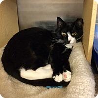 Adopt A Pet :: Winston - Colmar, PA