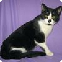 Adopt A Pet :: Alister - Powell, OH