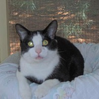 Adopt A Pet :: MICKEY MOUSE - MECHANICSVILLE, VA