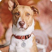 Adopt A Pet :: Bryan - Portland, OR