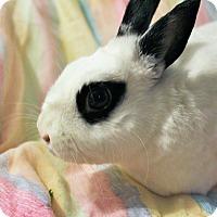 Adopt A Pet :: Brooklyn - Hillside, NJ