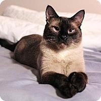 Adopt A Pet :: Logan (Polydactyl) - St. Louis, MO