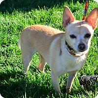 Adopt A Pet :: Shamrock - Meridian, ID
