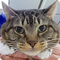 Adopt A Pet :: Annie - Laguna Woods, CA