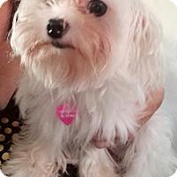 Adopt A Pet :: Snowwhite &Coconut - Cincinnati, OH