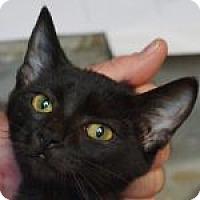 Adopt A Pet :: Garbo - Medford, MA