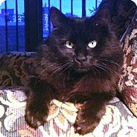 Adopt A Pet :: Niles - Vancouver, BC