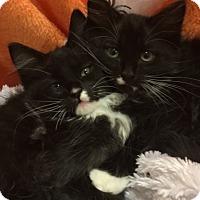Adopt A Pet :: Dottie - Pasadena, TX