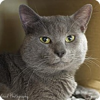 Adopt A Pet :: Billy - Alpharetta, GA