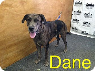 Great Dane Dog for adoption in Waycross, Georgia - Dane