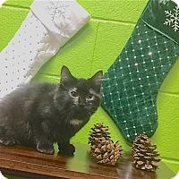 Adopt A Pet :: Boo Boo - Pulaski, TN