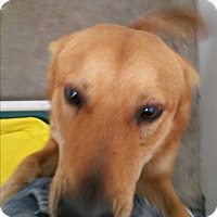 Adopt A Pet :: Hons - Chippewa Falls, WI
