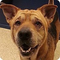 Adopt A Pet :: Oliver - Barnegat Light, NJ