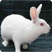 Adopt A Pet :: Ricki - Williston, FL