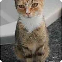 Adopt A Pet :: Isis - Riverside, RI