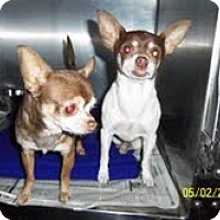 Adopt A Pet :: Brooks and Dunn - Shawnee Mission, KS