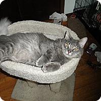 Adopt A Pet :: Fluffa - Milwaukee, WI