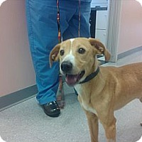 Adopt A Pet :: Monkey - Hilliard, OH