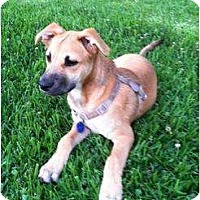 Adopt A Pet :: Rosey - Lake Forest, CA