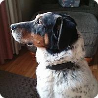 Adopt A Pet :: Sadie - Elk River, MN