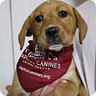 Adopt A Pet :: BL - Pup2