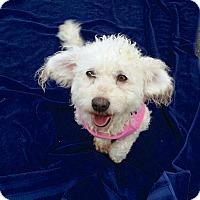 Adopt A Pet :: Sadie - Redondo Beach, CA