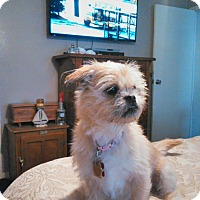 Adopt A Pet :: Hannah - LaGrange, OH