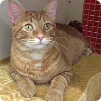 Adopt A Pet :: Ethan - Merrifield, VA