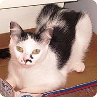 Adopt A Pet :: Pyper - Burlington, ON