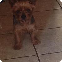 Adopt A Pet :: Rudy - Brookside, NJ