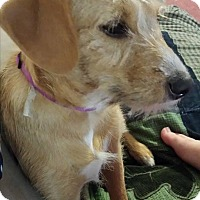 Adopt A Pet :: liberty - mooresville, IN