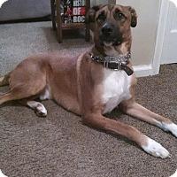 Adopt A Pet :: Cheech - Eastpointe, MI