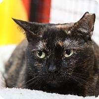 Adopt A Pet :: Mama T - Sarasota, FL
