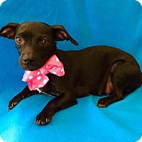 Adopt A Pet :: Jacqueline - Irvine, CA