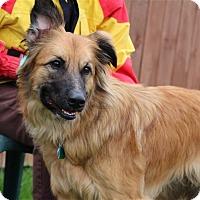 Adopt A Pet :: Honey - Elyria, OH