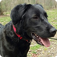 Adopt A Pet :: Easy - Capon Bridge, WV