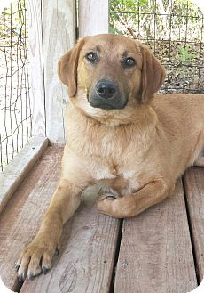 Adopt A Pet :: Alexia  - Snow Hill, NC