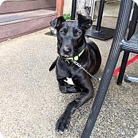 Adopt A Pet :: Tarasca - Marina del Rey, CA