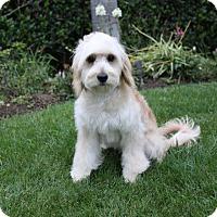Adopt A Pet :: CALLAN - Newport Beach, CA