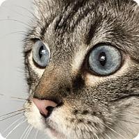 Adopt A Pet :: Tessa - Fort Collins, CO