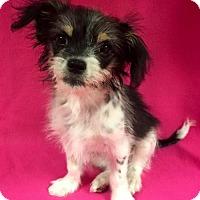 Adopt A Pet :: Libby - Alta Loma, CA
