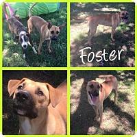 Adopt A Pet :: Foster - Arlington, TX