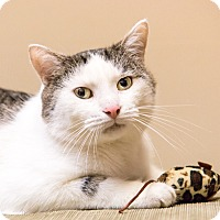 Adopt A Pet :: Bobbert - Chicago, IL
