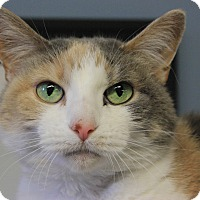 Adopt A Pet :: Grizzy - New Richmond,, WI