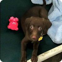 Adopt A Pet :: Annabell - Glenwood, MN